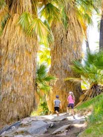 Hiking Palm Canyon Trail with Kids
