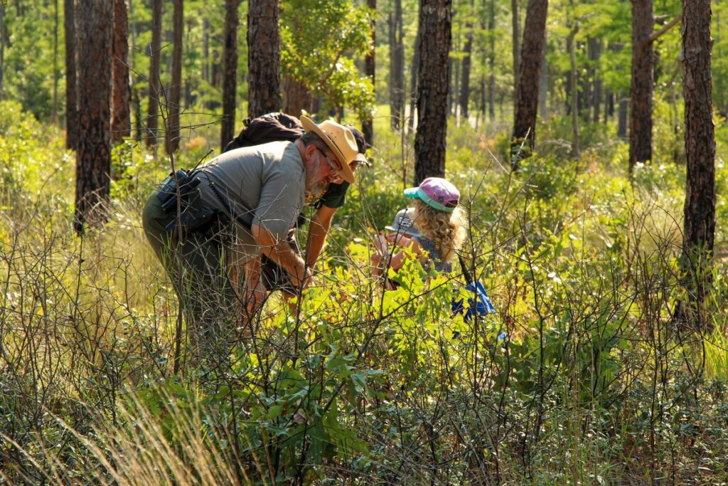 activities for kids in wilmington nc - see Venus flytrap plants in the wild at Carolina Beach State Park