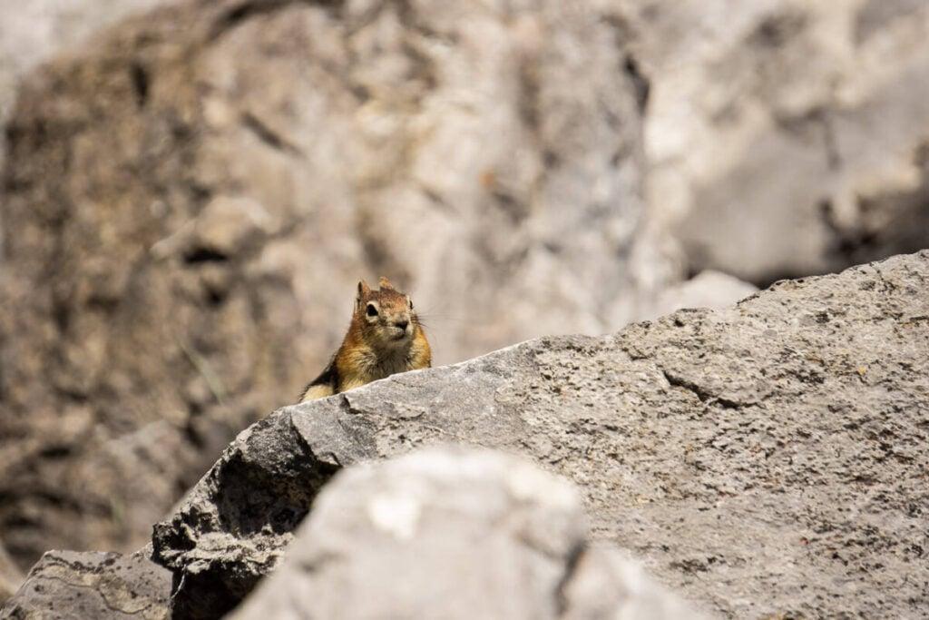 Wildlife in Banff National Park