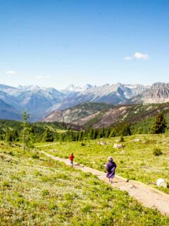 Sunshine Meadows Hiking in Banff with Kids