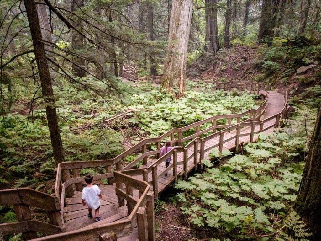 when visiting Revelstoke with kids, try the Giant Cedars Boardwalk in Mount Revelstoke National Park - it is one of the best easy revelstoke hiking trails