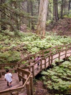 The Giant Cedars Boardwalk in Mount Revelstoke National Park is one of the best easy revelstoke hiking trails
