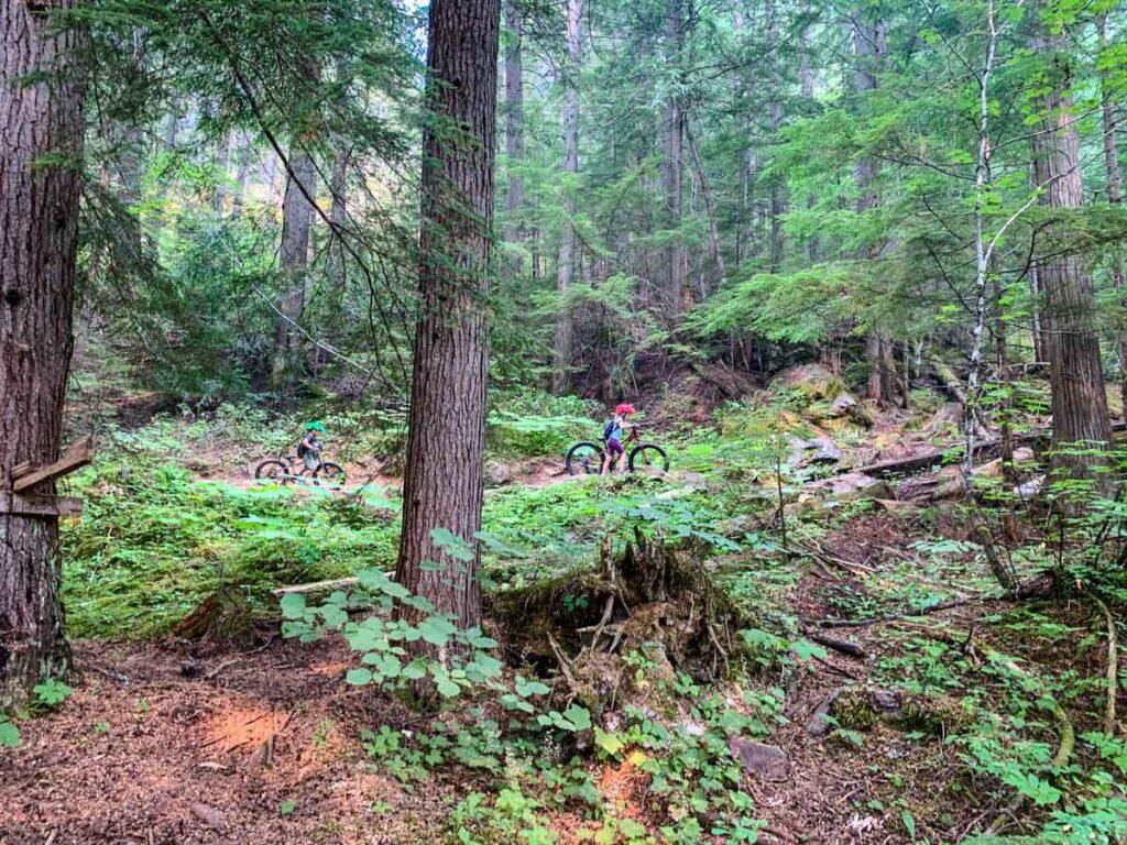 easy Revelstoke bike trails - Eager Beaver - Beaver Tail - Dusty Beaver