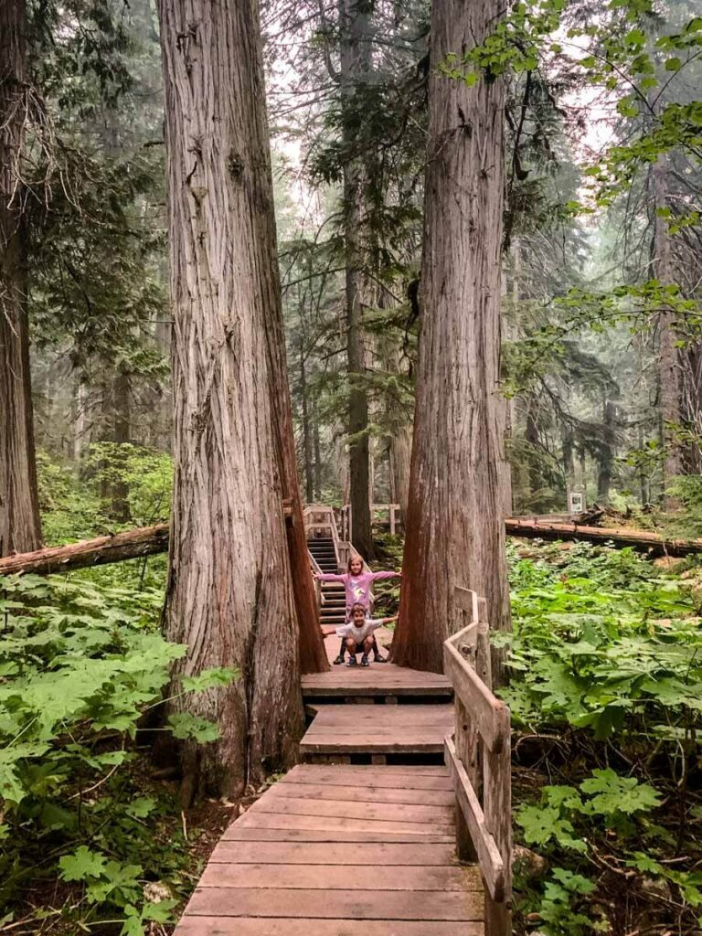 The Giant Cedars Boardwalk is one of the best easy Mount Revelstoke National Park hikes for kids