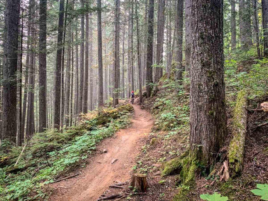 easy Revelstoke mtb trails at Mt. macpherson