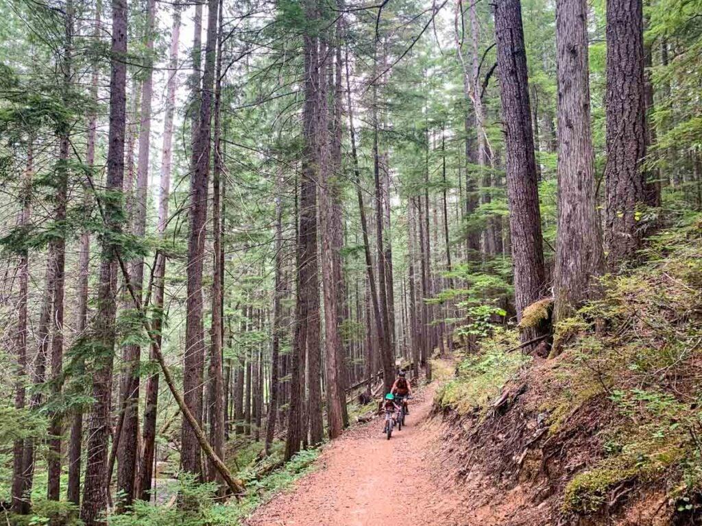 Miller Time is the best easy mountain biking trail in Mount Macpherson.