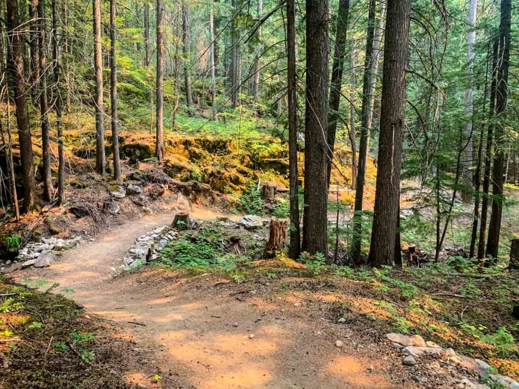 easy Mount Revelstoke mountain biking trails - Soren Sorenson 2km trail