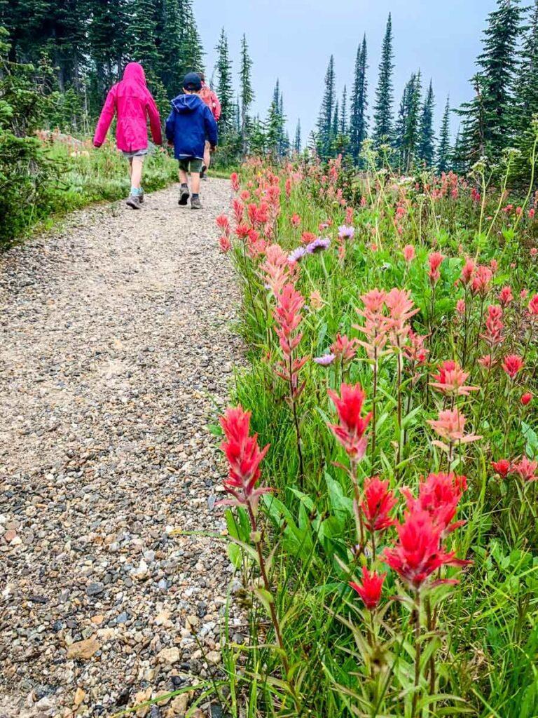 easy hiking in revelstoke with kids - Koo Koo Sint Trail in Mount Revelstoke National Park Summit Area