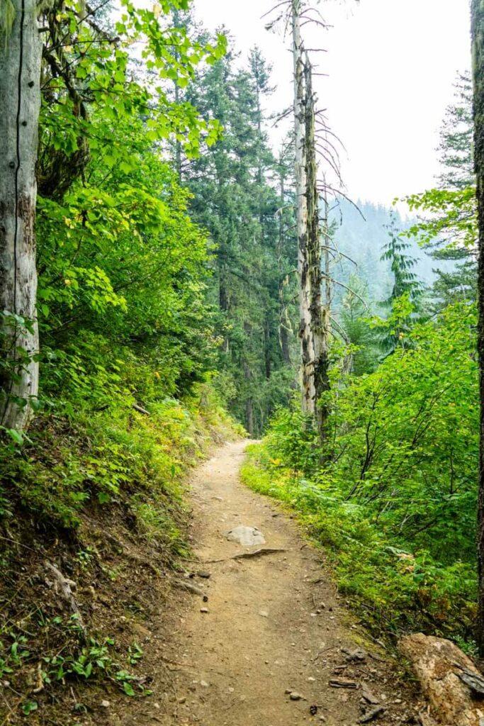 best easy hiking revelstoke, bc - broken bridge trail