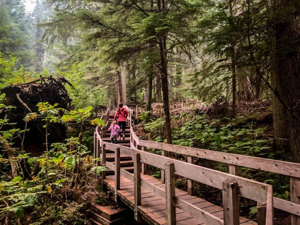 try the Giant Cedars Boardwalk for some enjoyable easy revelstoke hiking