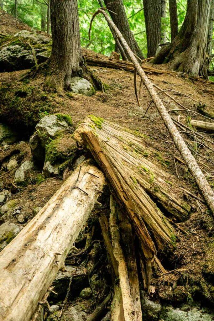 The Broken Bridge Trail is one of the best easy Revelstoke hiking trails
