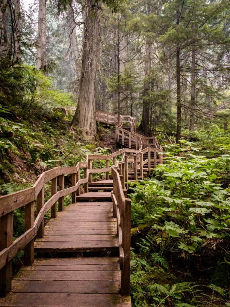 the Giant Cedars Boardwalk is one of the best easy hikes in revelstoke national park