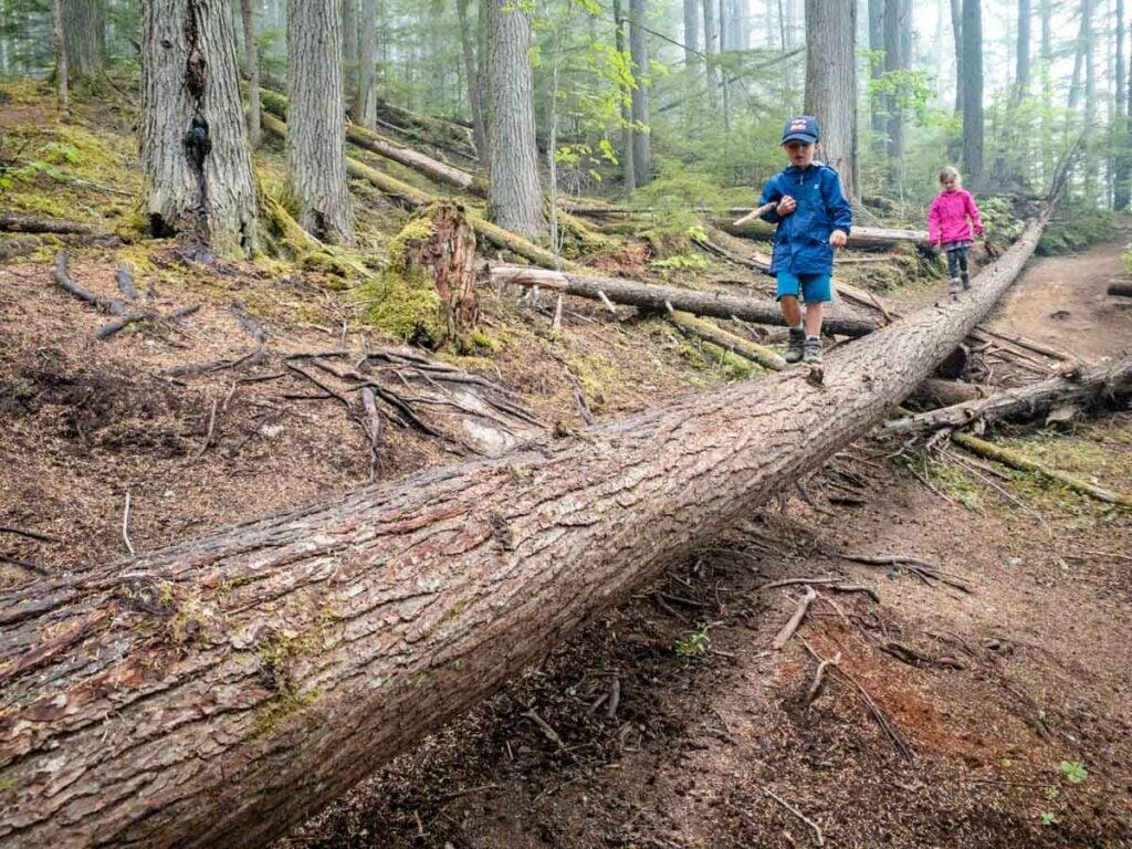 fun easy hikes in Revelstoke for kids - Begbie Falls