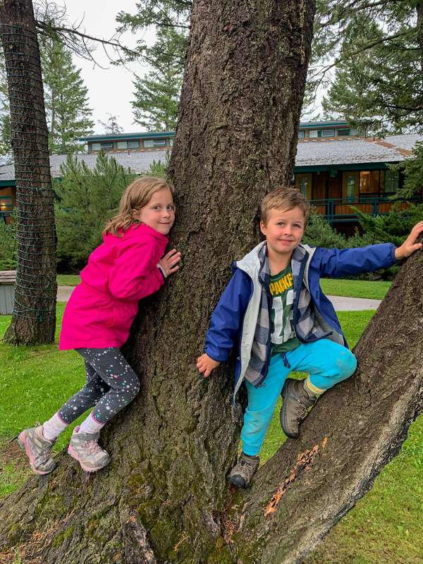 kids climbing a tree at the Fairmont Hot Springs Resort - a kid-friendly hotel near Invermere