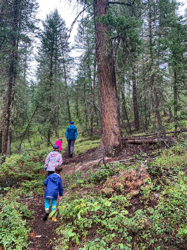 exploring the forest on a family hike is a fun thing to do with kids near Invermere